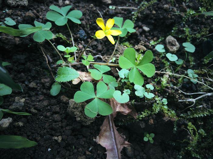 長女が取った花の写真を画像処理した写真